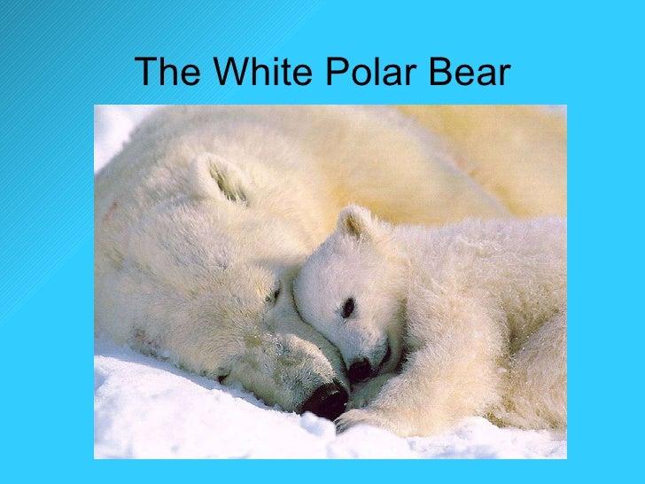 The White Polar Bear
