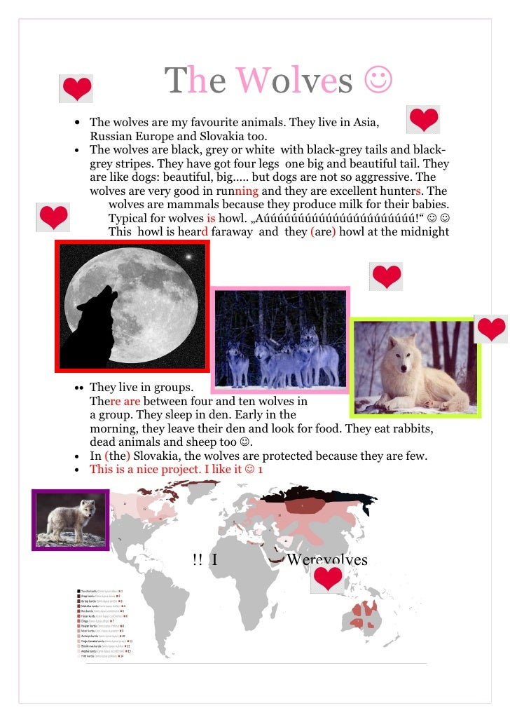 The Wolves  • The wolves are my favourite animals. They live in Asia,   Russian Europe and Slovakia too. • The wolves are...