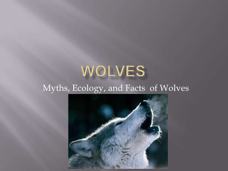 Myths, Ecology, and Facts of Wolves