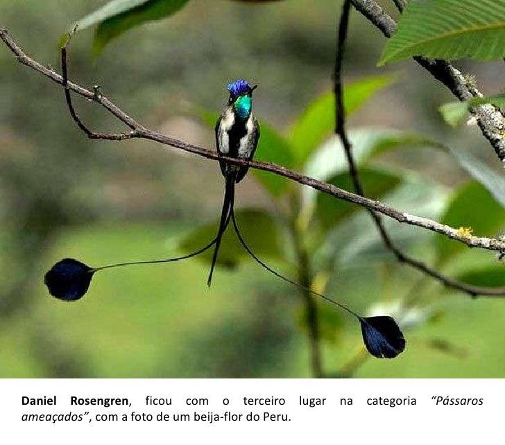 Famosos Os pássaros mais raros do mundo HL97