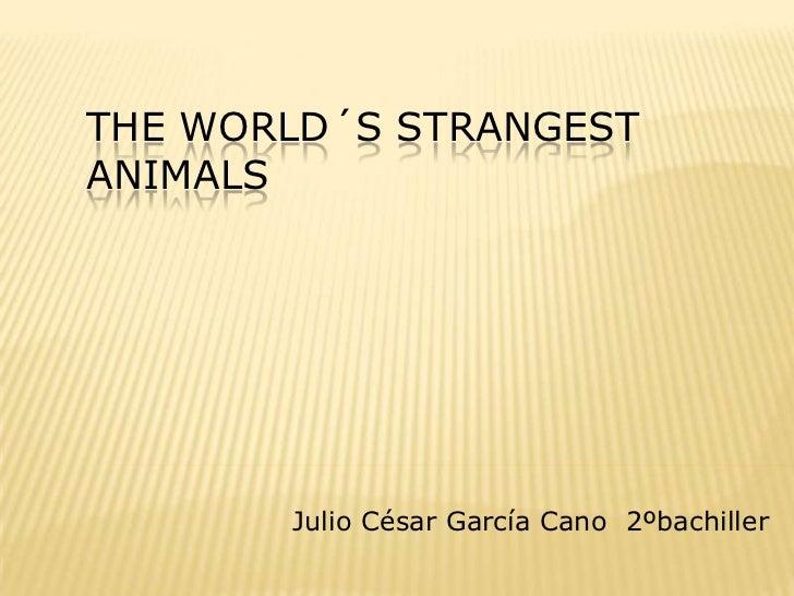 THE WORLD´S STRANGESTANIMALS       Julio César García Cano 2ºbachiller