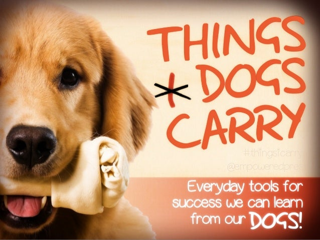 Everyday tools forsuccess we can learnCARRYDOGSTHINGSfrom our DOGS!#thingsicarry@empoweredpres