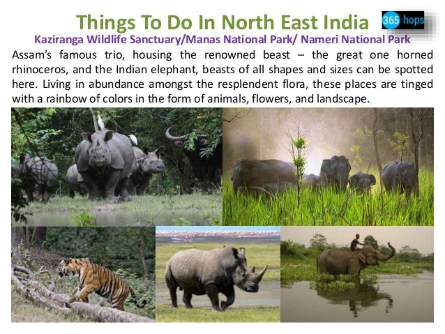 manas national park india Manas national park or manas wildlife sanctuary is a national park, unesco natural world heritage site, a project tiger reserve, an elephant reserve.