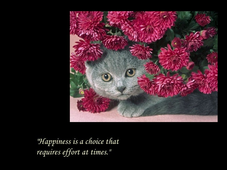 """""""Happiness is a choice that requires effort at times."""""""