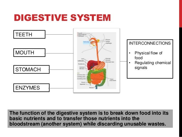 Feedback loop digestive system diagram car wiring diagrams explained thinking in systems donella meadows chapters 1 to 3 rh slideshare net endocrine feedback loop thyroid feedback loop ccuart Image collections