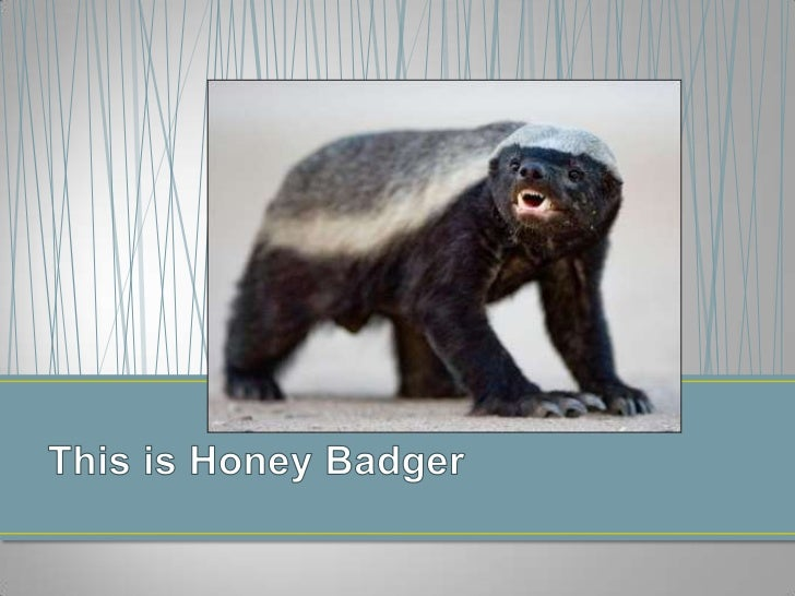 This is Honey Badger