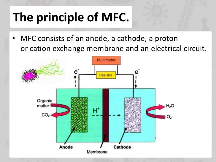 microbial fuel cell dissertation The pennsylvania state university the graduate school college of engineering electricity from complex biomass using microbial fuel cells a dissertation in.