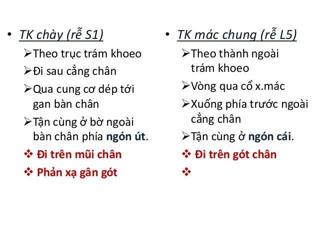 • TK chày (rễ S1) Theo trục trám khoeo Đi sau cẳng chân Qua cung cơ dép tới gan bàn chân Tận cùng ở bờ ngoài bàn chân ...