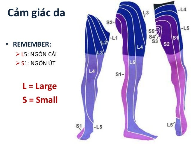 Cảm giác da • REMEMBER: L5: NGÓN CÁI S1: NGÓN ÚT L = Large S = Small