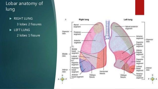 Thoracic anatomy on various imaging modalities