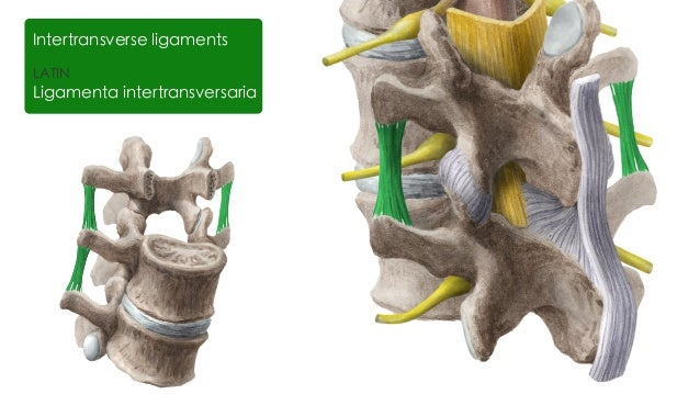 lumbar facet joint steroid injections
