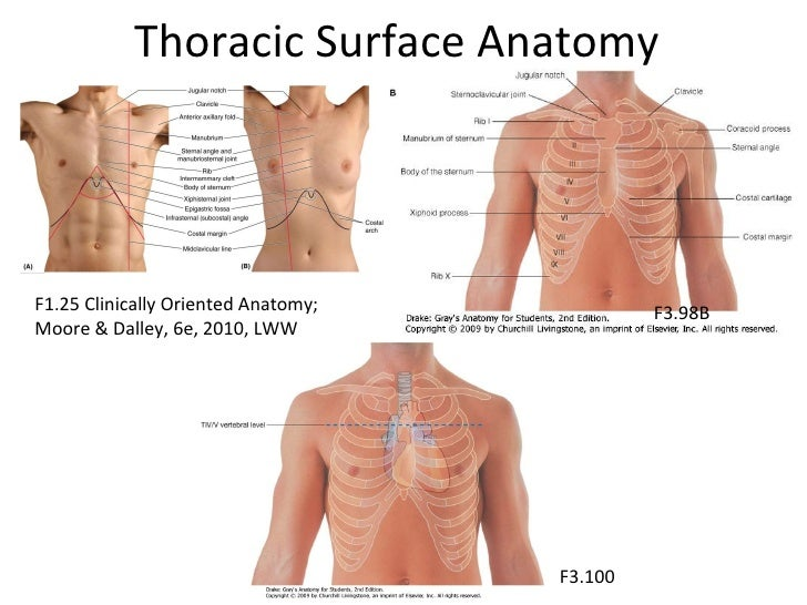 Thoracic surface anatomy images