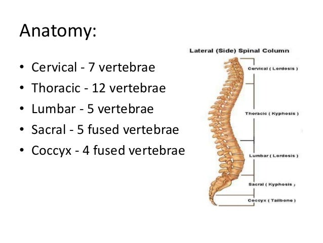 Thoraco lumbar fractures of spine