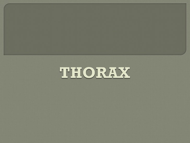 Thorax Os Powerpoint