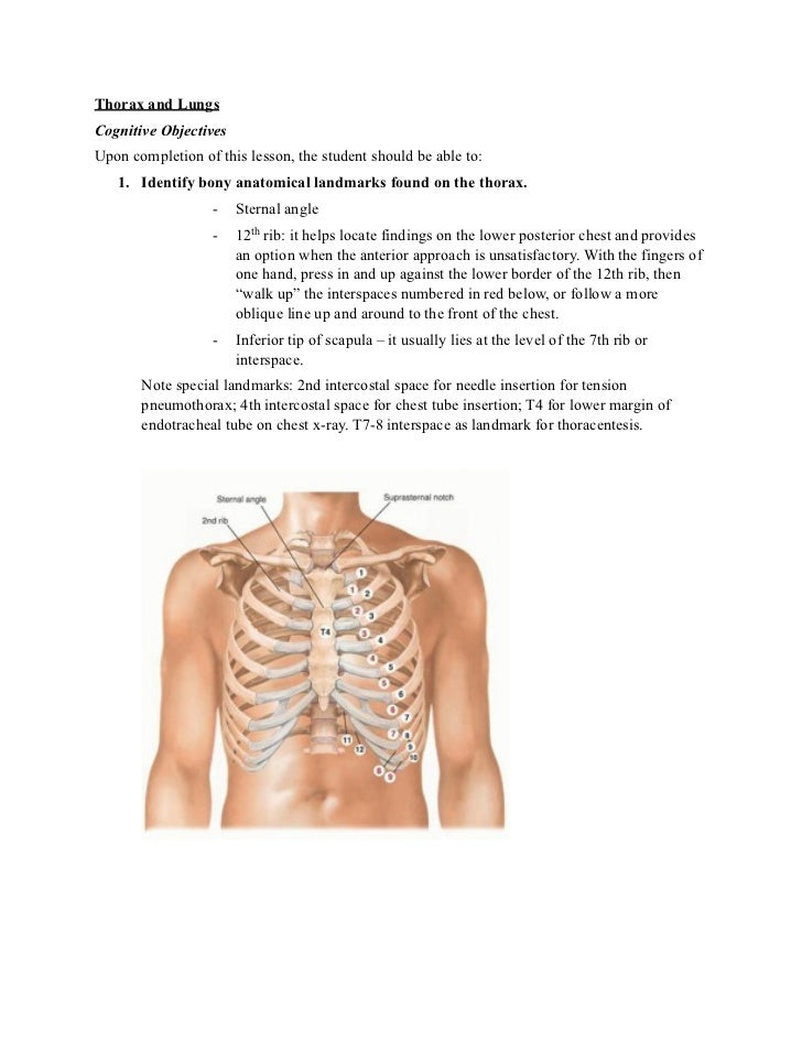 Thorax and LungsCognitive ObjectivesUpon completion of this lesson, the student should be able to:   1. Identify bony anat...