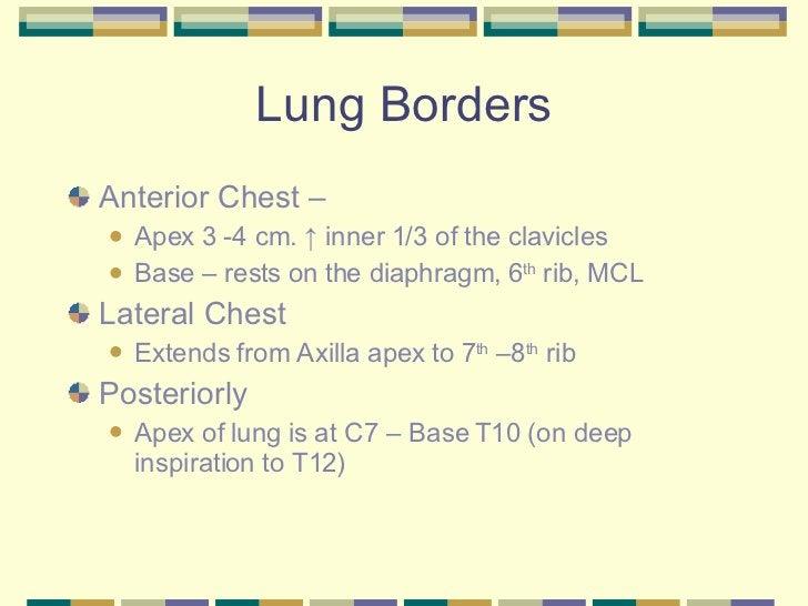 Lung Borders <ul><li>Anterior Chest –  </li></ul><ul><ul><li>Apex 3 -4 cm.  ↑ inner 1/3 of the clavicles </li></ul></ul><u...