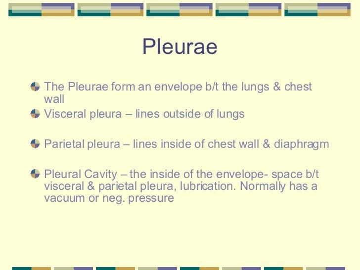 Pleurae <ul><li>The Pleurae form an envelope b/t the lungs & chest wall </li></ul><ul><li>Visceral pleura – lines outside ...