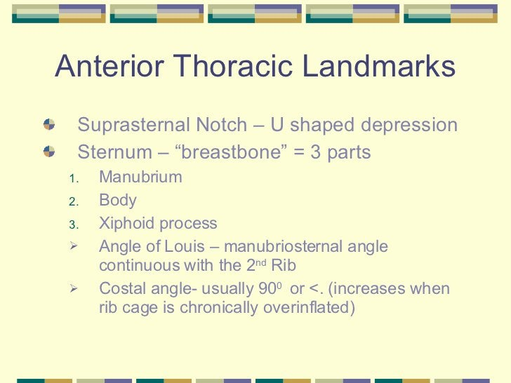 "Anterior Thoracic Landmarks <ul><li>Suprasternal Notch – U shaped depression  </li></ul><ul><li>Sternum – ""breastbone"" = 3..."