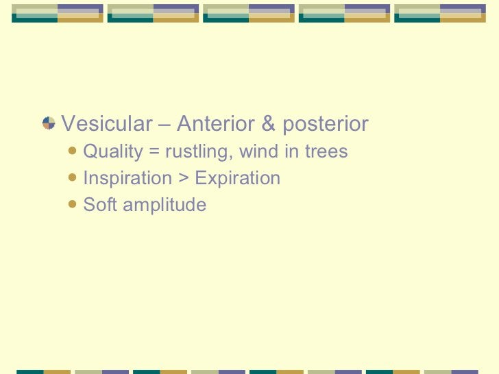<ul><li>Vesicular – Anterior & posterior </li></ul><ul><ul><li>Quality = rustling, wind in trees </li></ul></ul><ul><ul><l...