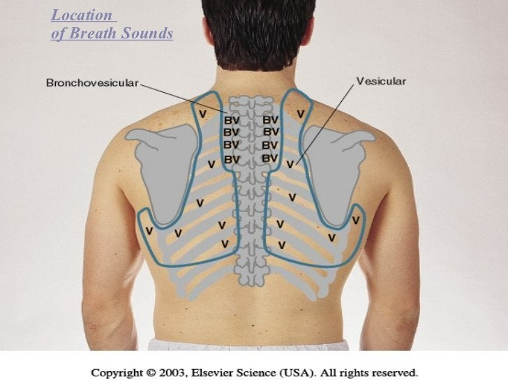 Location  of Breath Sounds