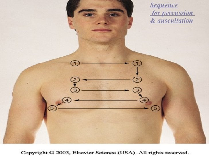 Sequence for percussion  & auscultation