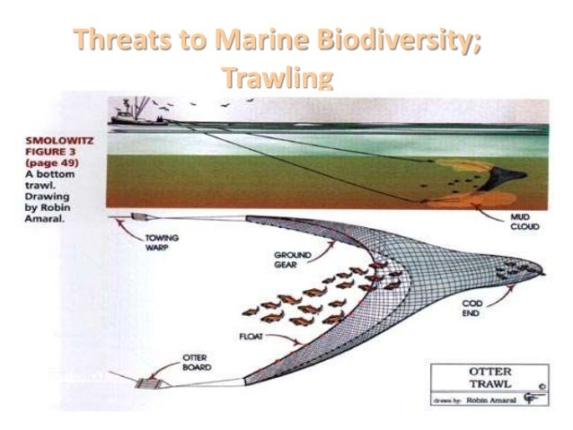 marine biodiversity essay Ices journal of marine science, volume 67, issue 1, 1 january 2010,   controlling biodiversity, productivity, and the resilience of marine ecosystems   essay: some thoughts on sustainability and marine conservation.