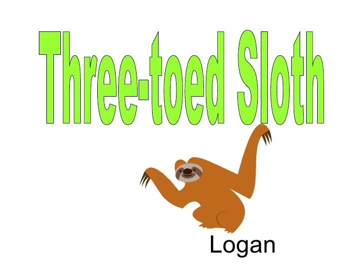 Three-toed Sloth Logan