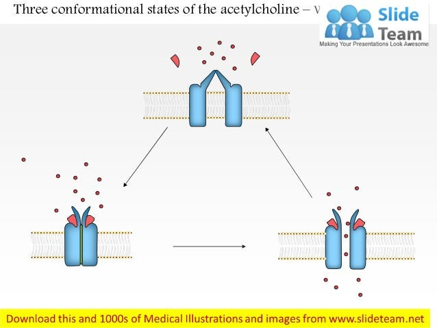 Three conformational states of the acetylcholine – With Labels Removed