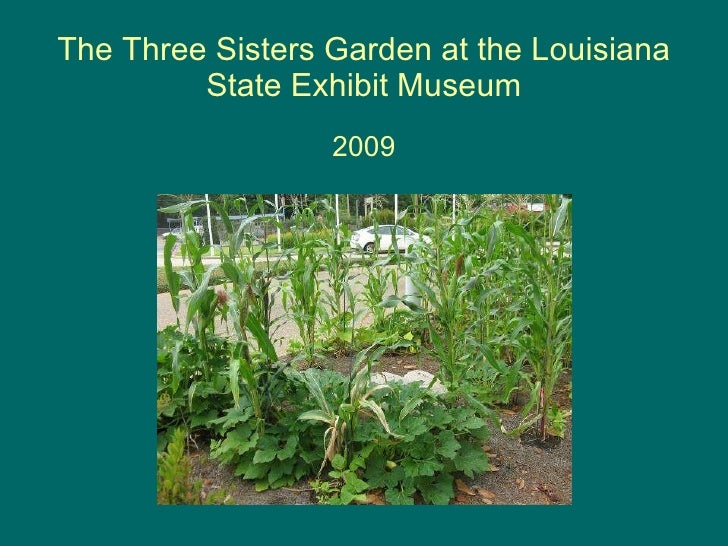 The Three Sisters Garden at the Louisiana State Exhibit Museum 2009