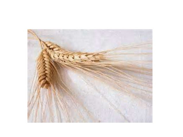Cleaning process/mechanism:-The function of cleaning unit is to remove chaff or other foreign matters from the grain.This...