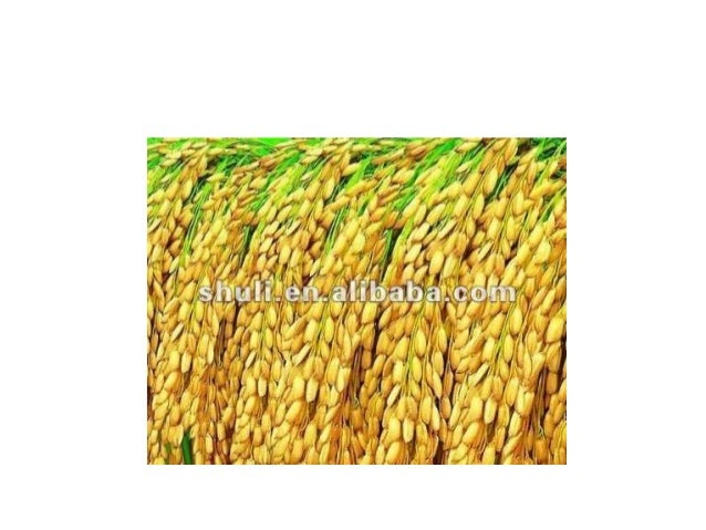 TM • Parts of multi crop thresher and their function:-  Feeding schute-it perform the feeding action of crop materials ca...