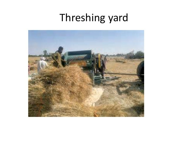 • Factor affecting thresher performance- Plant or crop factor-types of crops,moisture content of grains,variety of crops ...