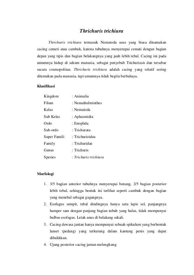 Thrichuris trichiura Thrichuris trichiura termasuk Nematoda usus yang biasa dinamakan cacing cemeti atau cambuk, karena tu...