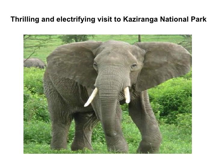 Thrilling and electrifying visit to Kaziranga National Park