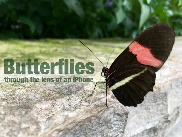 Butterfliesthrough the lens of an iPhone