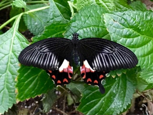 Though The Lens of an iPhone: Butterflies