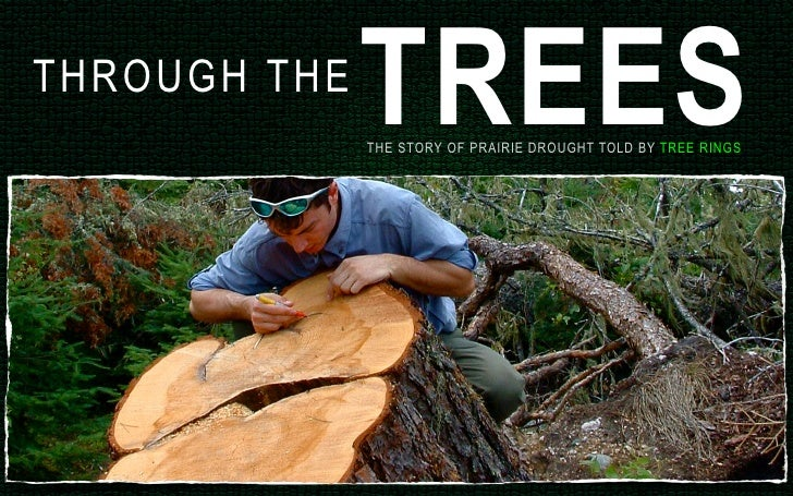 TREES THR O U G H T H E                     THE STORY OF PRAIRIE DROUGHT TOLD BY TREE RINGS