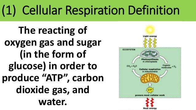 Ths General Biology Unit 1 Our Environment Cellular Respiration Notes