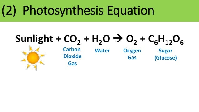 photosynthesis notes Below are some resources that you might find useful in helping you to learn and understand the concepts covered in this unit related files powerpoint notes - how energy cycles how energy cycles1ppt 1641984 kb (last modified on june 20, 2017) comments (-1) how energy cycle - student notes handout.