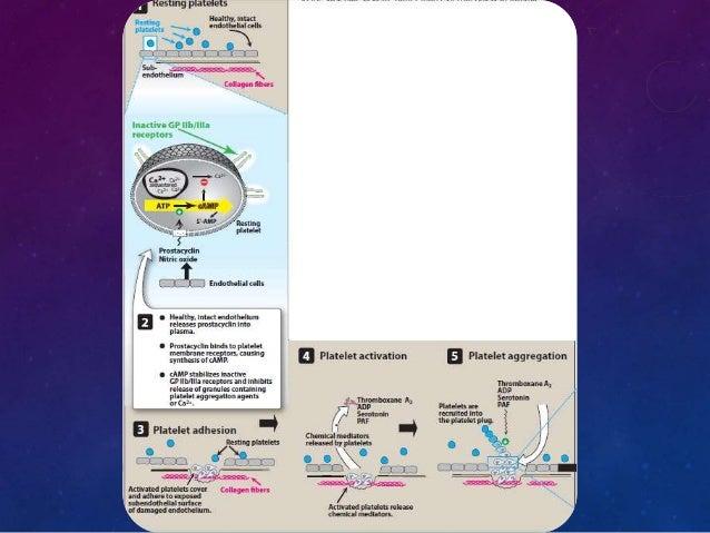 • Làm tăng AMPv tiểu  cầu nên có tác dụng  chống kết dính tiểu  cầu.  1.2 Cơ chế tác dụng.  Ức chế thụ thể  ADP : Ticlopid...