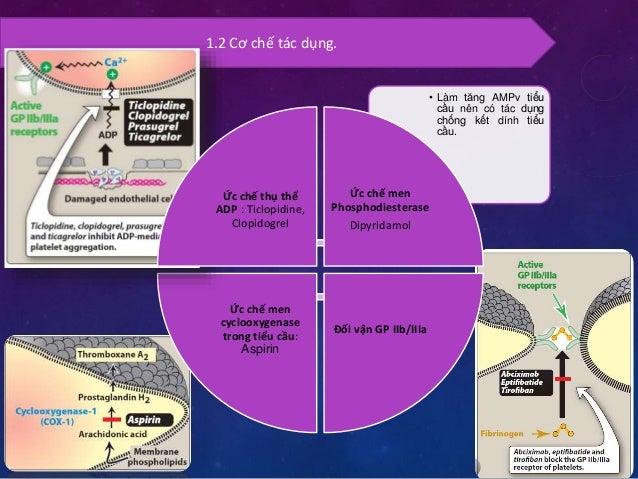 1.2 Phân loại  Ức chế men  cyclooxygenase trong  tiểu cầu: Aspirin  Ức chế men  Phosphodiesterase  Dipyridamol  Ức chế thụ...
