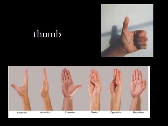 Thumb reconstruction Slide 2