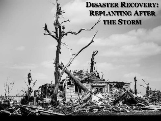 DISASTER RECOVERY: REPLANTING AFTER THE STORM