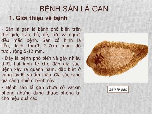 san-la-gan-moi-de-doa-tiem-an-kho-phat-hien-02