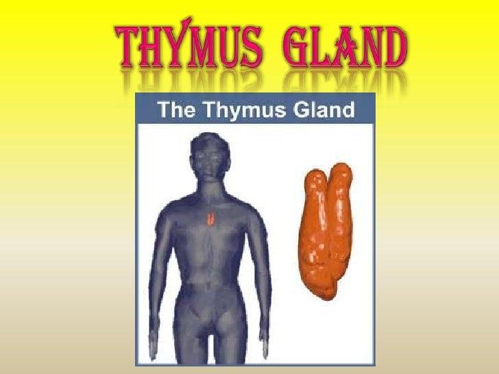 Thymus gland ppt.