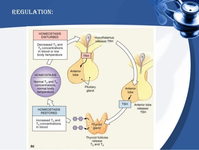 corticosteroids asthma mechanism
