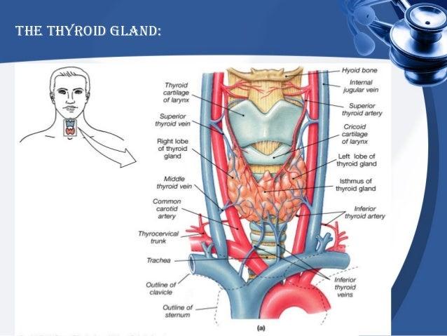 how to produce thyroid hormone