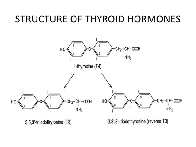 Thyroid Functions And Disorders Presentation