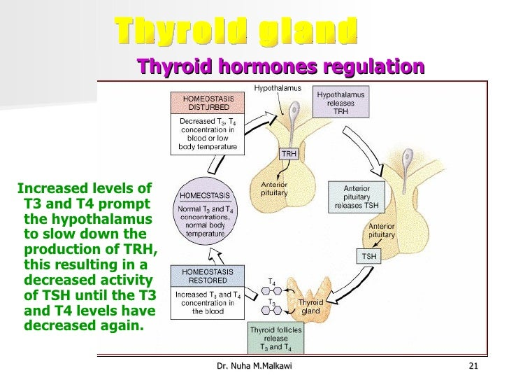 Thyroid and temperature regulation