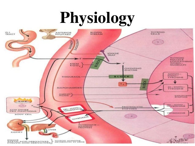 Thyroid gland (anatomy and physiology) biochemical basis
